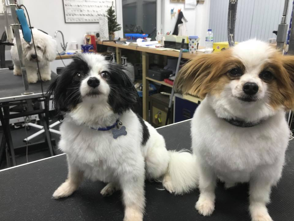 Dandy Dog Grooming Parlour